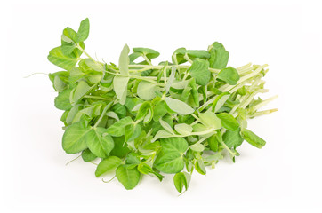 Bunch of snow pea microgreen on white background. Shoots of Pisum sativum, also called mangetout or sugar peas. Young plants, seedlings, sprouts and cotyledons. Macro food photo, close up, front view.