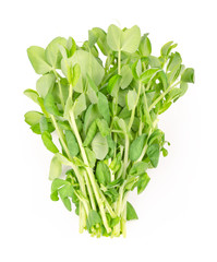 Bunch of snow pea microgreen on white background. Shoots of Pisum sativum, also called mangetout or sugar peas. Young plants, seedlings, sprouts and cotyledons. Macro food photo, close up, from above.