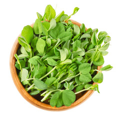 Snow pea microgreen in wooden bowl. Green shoots of Pisum sativum, also called mangetout or sugar peas. Young plants, seedlings, sprouts and cotyledons. Macro food photo close up from above over white