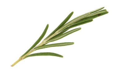 Single sprig of organic rosemary on a white background.