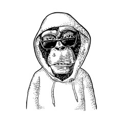 Monkey hipster with sunglasses dressed in the hoodie. Vintage engraving
