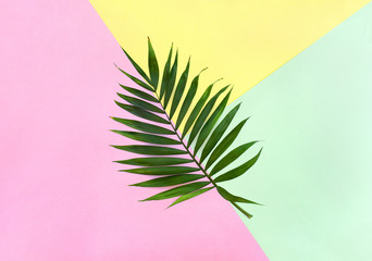 Tropical leaf palm tree on background of three different color paper sheets ( pink, green, yellow ) with geometric pattern background. Top view, flat lay.