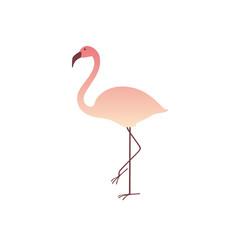 Colorful pink flamingo isolated on white background. Summer Vector Illustration. EPS10