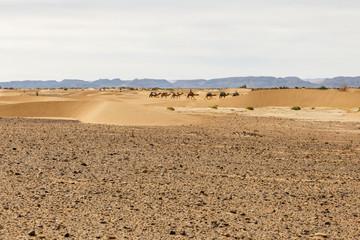Camel caravan in the Sahara desert, Morocco. Africa