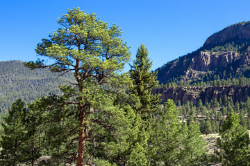 Tall pines and steep palisades line the Rio Grande and the road to Creede in the San Juan Mountains of southern Colorado