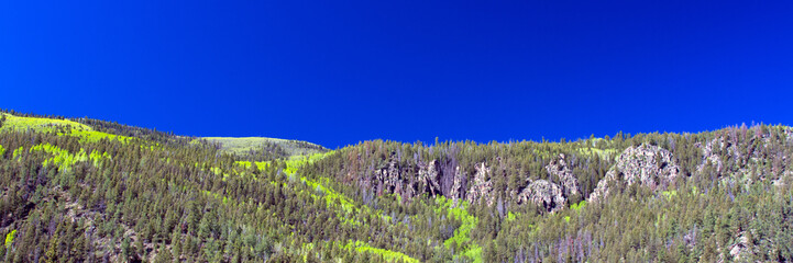 Panorama of aspens leafing out in spring, which brighten the coniferous forests of the palisades, the Río Grande, and the road to Creede in the Rocky Mountains of southern Colorado