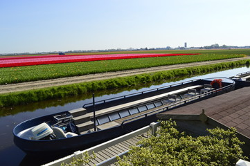 Flower field and boat