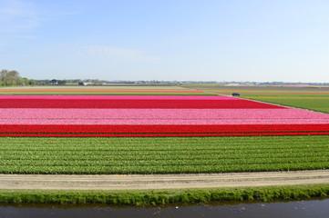 Flowers Carpet
