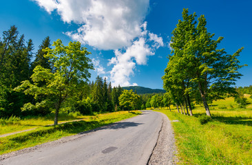 trees by the road in mountains. beautiful nature scenery in mountainous area. lovely transportation background. wonderful summer weather with some clouds on a blue sky