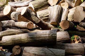 Pile of cut logs in the woods