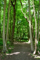 Trees and a path in a countryside park