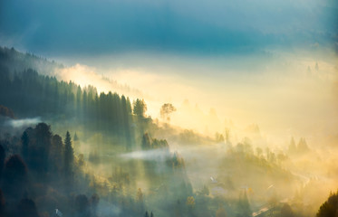 trees in glowing morning fog. gorgeous nature background. amazing autumnal atmosphere in Carpathian mountains