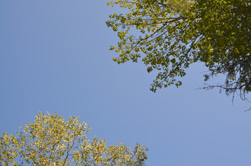 Blue Sky and Trees 1