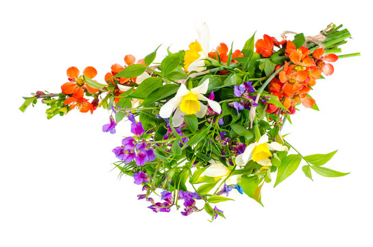 Bright spring flowers isolated on white background