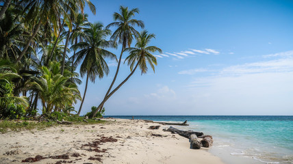 A beautiful beach with green palm trees on a tropical caribbean island in the paradisiacal San Blas Islands, Panama.