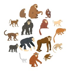 Monkey types icons set in flat style isolated vector illustration