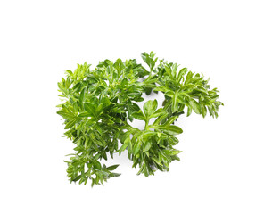 Aromatic fresh green parsley on white background