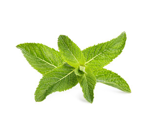 Fresh green mint leaves on white background