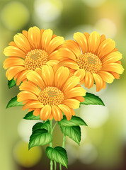 Beautiful Sunflower on Nature Background
