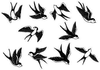 Set of hand drawn swallow illustrations on white background. Design elements for poster, card.