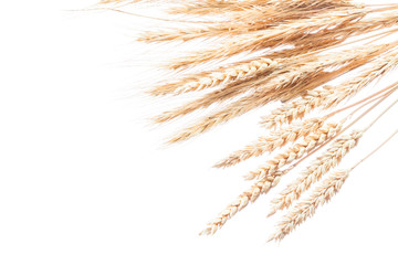 Wheat and rye ears isolated on white
