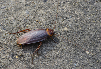 Cockroach insect on road