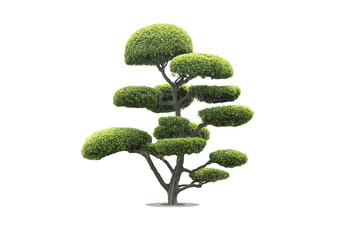 Foto op Plexiglas Bonsai bonsai tree in garden isolated on white background