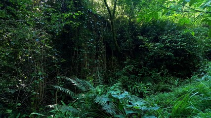 green forests in the foothills . lush vegetation