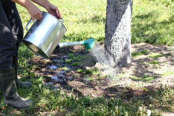 caring gardening in the spring and summer time/ gardener watering from a watering can with a flower bed around a tree in the garden
