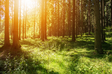 Wald Bäume Natur Wiese Sonnenuntergang