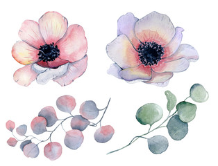 Watercolor anemone flowers and leaves