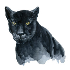 Watercolor black panther Wiledlife illustration