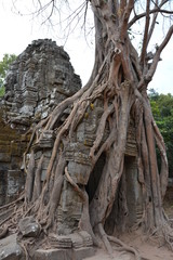 カンボジアのアンコール遺跡群~タ・ソム