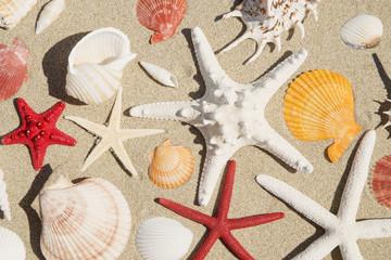 Seashells and starfishes