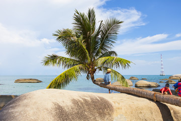 Coconut tree at coconut beach on Son island, Kien Giang, Vietnam. Near Phu Quoc island