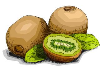 Vector illustration of drawing fruit kiwi.