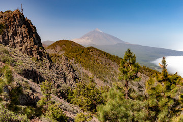 Pine forest in front of Pico del Teide, in the Teide National Park, Tenerife, Canary Islands