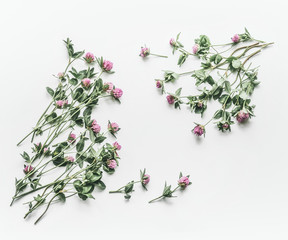 Floral frame made of flowers on white background. Flat lay, top view, copy space. Flowering red clover , Trifolium pratense. Summer concept