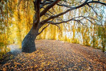 Queenstown autumn color