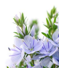 Beautiful blue flowers.