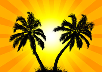 Two palms in the background of the sun