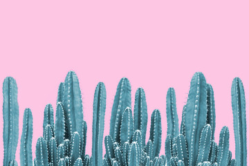 Wall Murals Cactus Green cactus on pink background