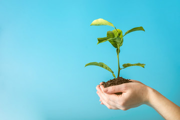 Sprout of new green tree in soil in human hands on blue background. Concept of environmental protection. Earth day