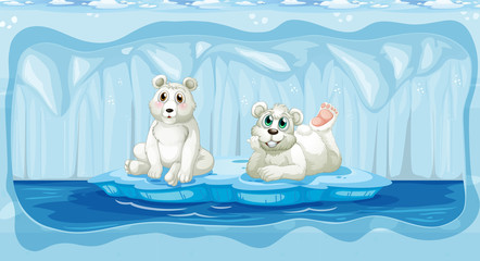 Polar Bear at The North Pole