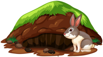 A Cute Rabbit Getting Out of Hole
