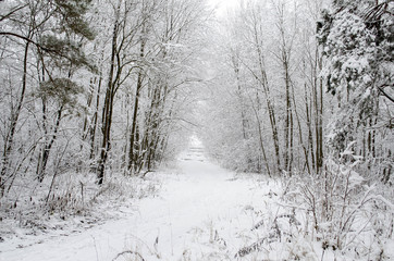 in a snow-covered forest in winter