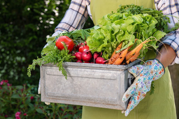 Unrecognisable female farmer holding crate full of freshly harvested vegetables in her garden. Homegrown bio produce concept. Sustainable living.