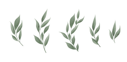 Vector set. Bay leaf. Green leaves on white background. Vector illustration. Fotoväggar