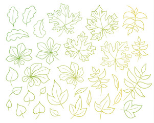 Set of autumn leaves isolated on white background.