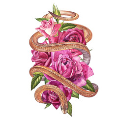 Snake with beautiful garden roses. Compositions of red and pink roses, watercolor illustration. Printing use t-shirt.